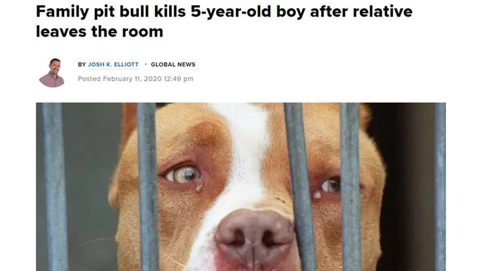 Boy Dies after Pitbull Attack - now what?