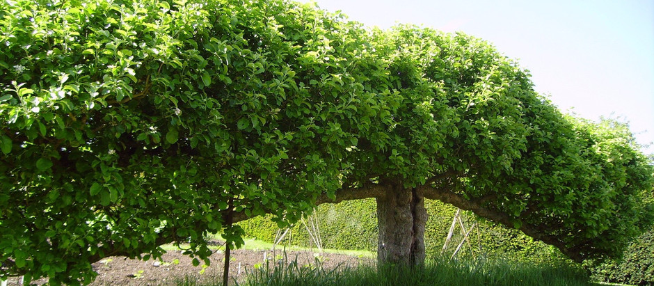Plant Pruning, Shaping and Training