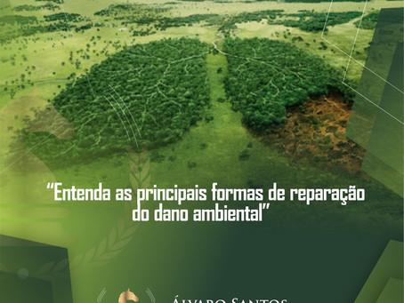 Entenda as principais formas de reparação do dano ambiental