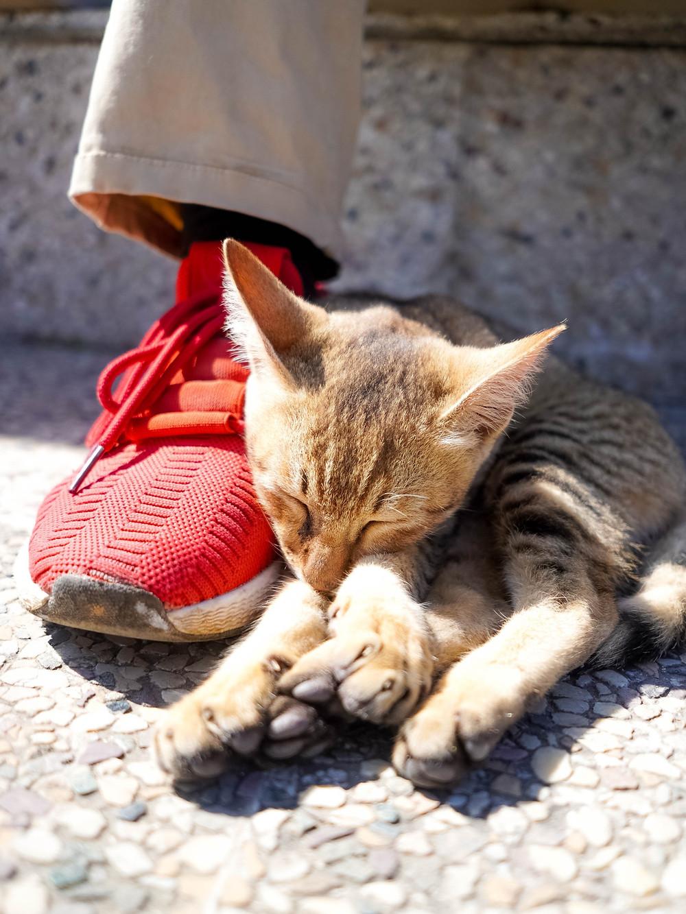 El gato con botas. El molinero que no tenía mucho para heredar. Cómo se hereda en Paraguay. Sucesiones. Testamento
