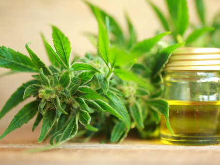 The Main Difference Between Hemp Oil and CBD Oil | Wanae CBD Products