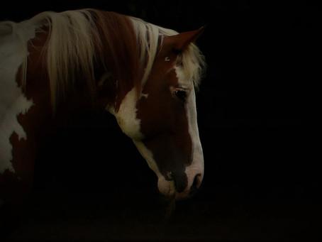 Waarom hou jij zoveel van jouw paard?