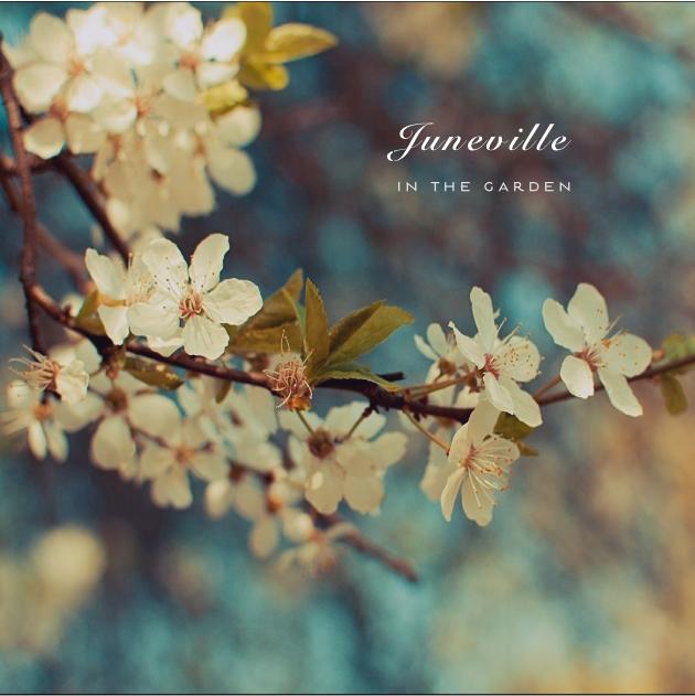 Juneville groeibriljant die je weg doet dromen