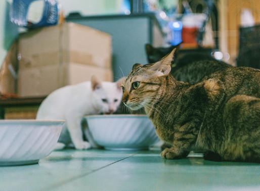 Ciclo éstrico das gatas