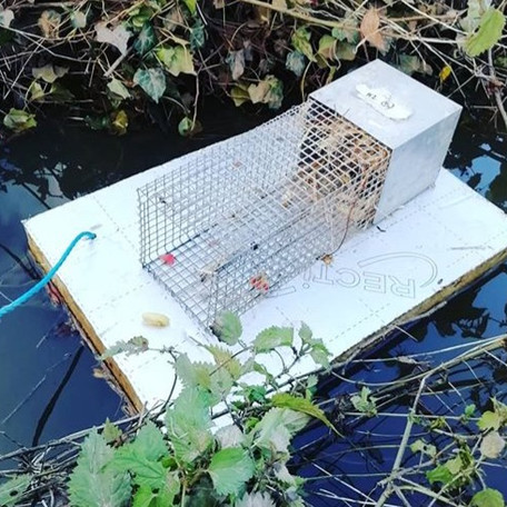 How to create a quick and easy conservation monitoring plan