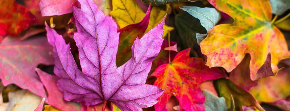 Toutes les couleurs de l'automne