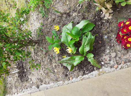 Bits from the Rennie's Garden