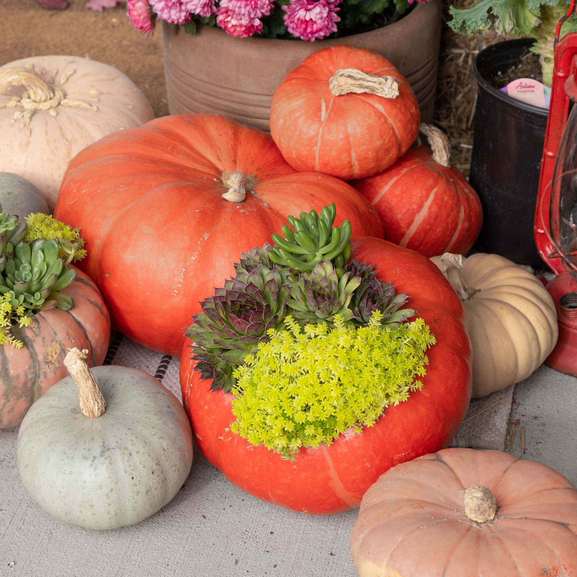 A Recipe For Success Create An Elegant Succulent Pumpkin Planter