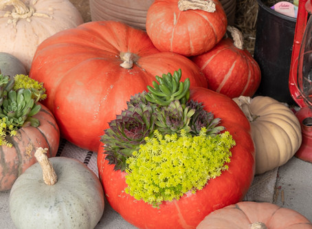 A Recipe For Success: Create An Elegant Succulent Pumpkin Planter