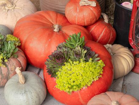 A Recipe For Success: Create An Elegant Succulent Pumpkin Planter