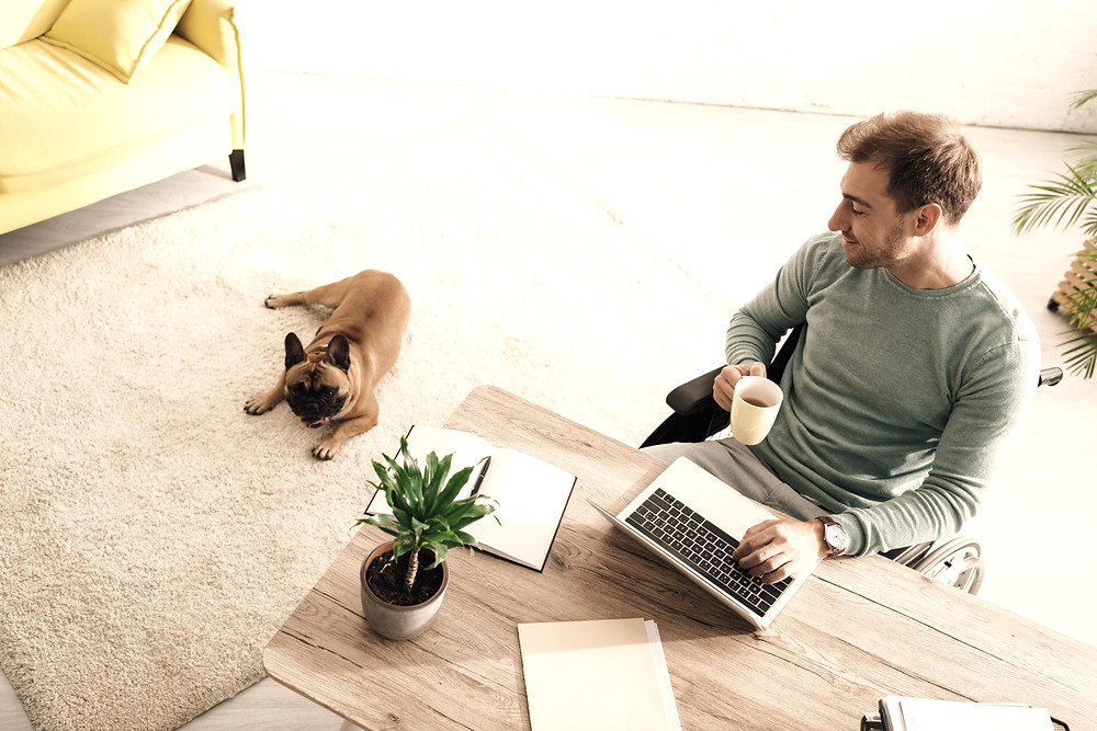 Home office with pets