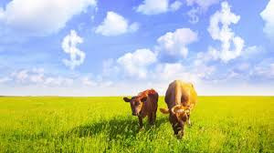 Livestock Roundup