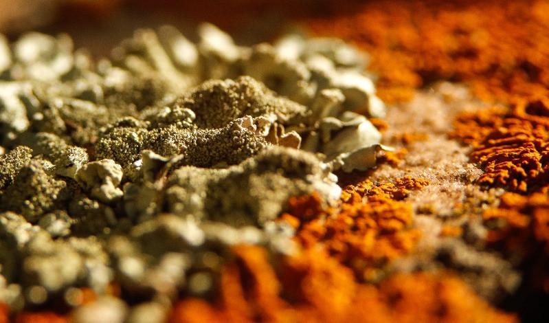 mould on carpet | Cleansmart