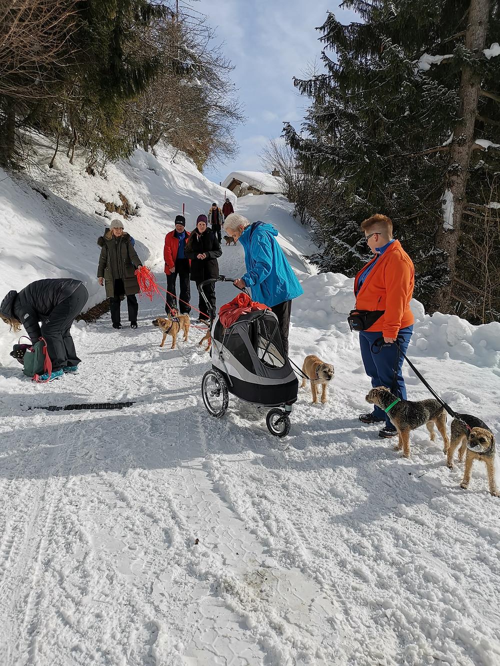 Border Terrier Schweiz