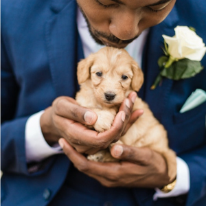 Generation Tux Wedding Suits, Wedding puppy