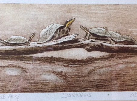 Turtle Scoop