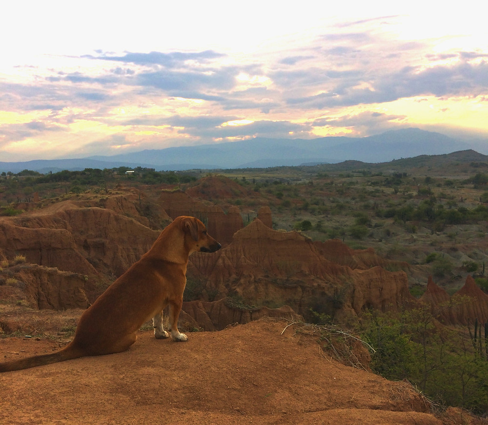 Un nouvel ami dans le désert de la Tatacoa