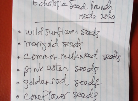 What's in our 2020 Seed Rounds? Two beneficial annuals and five native perennial seeds.