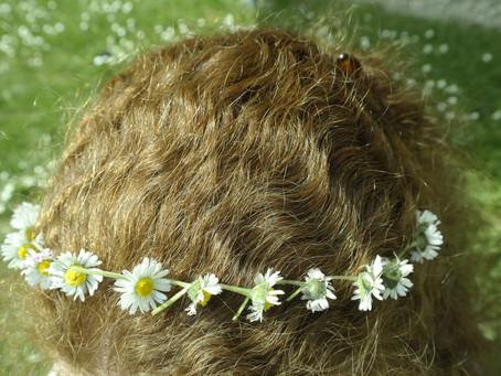Die ausdauernde Schöne – Bellis perennis oder einfach «Gänseblümchen»