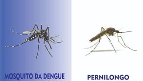Diferenças entre Mosquito da Dengue e Pernilongo