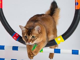 Как понять поведение кошек?