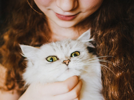 5 Tips for Kids in the Cat Lounge