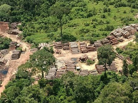 Brasil teve em média 3,3 mil hectares de desmatamentos por dia no ano passado, revela estudo