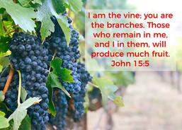 Lord's Vineyard
