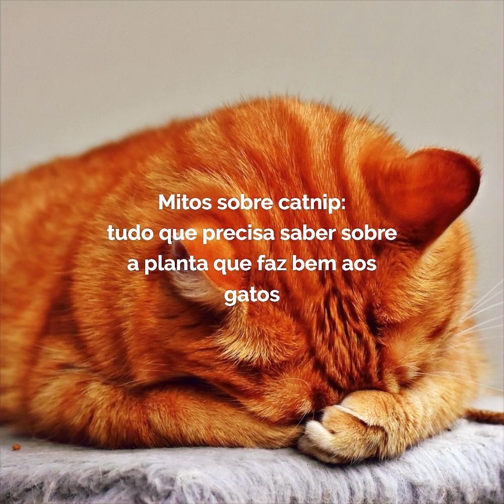 mitos sobre catnip