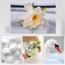 हिंदू धर्म में ज्ञान की देवी, सरस्वती है और सफेद साड़ी में दिखाई जातीं हैं, सफेद कमल के फूल पर बैठी है । सफेद  हंस  को  उनके वाहन के रूप में दिखाया जाता है