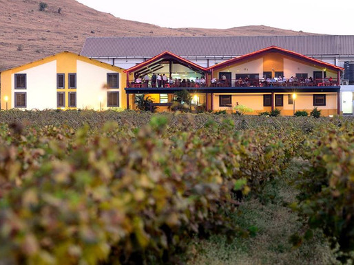 Top 4 Wine Tours in India