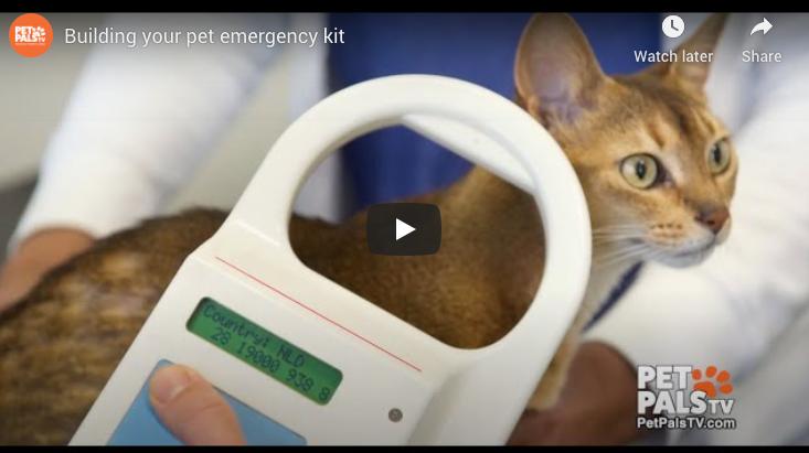 Building your pet emergency kit