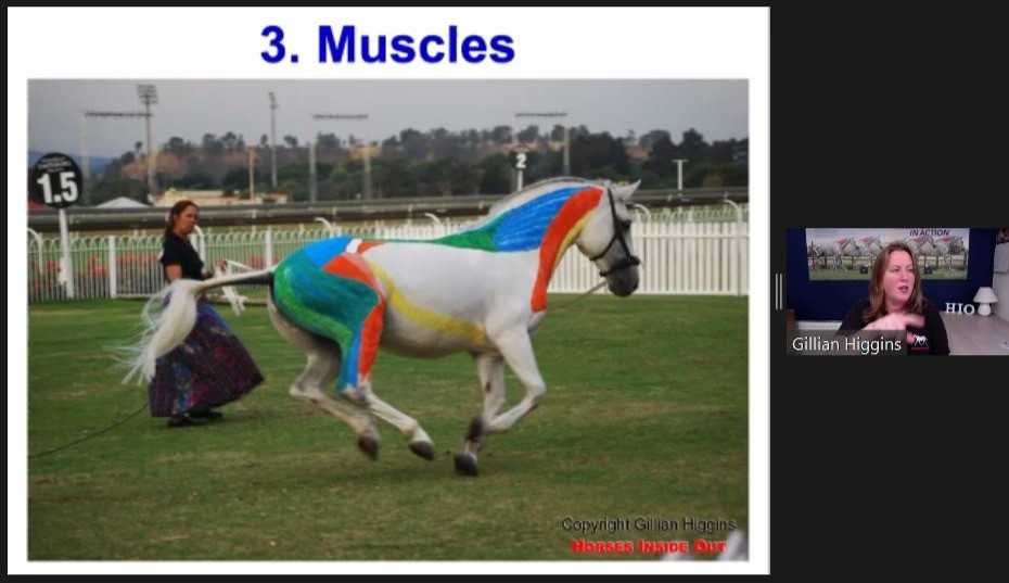 horse canter, myofascial chains, extensor chain, dorsal line, ventral line, flexor chain,muscle anatomy and biomechanics, horse back movement