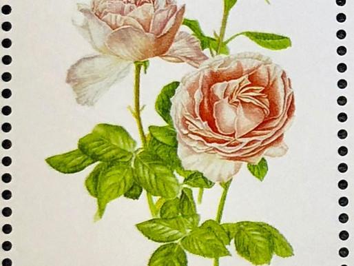 Princess Charlene of Monaco Garden Rose Featured on Postage Stamp
