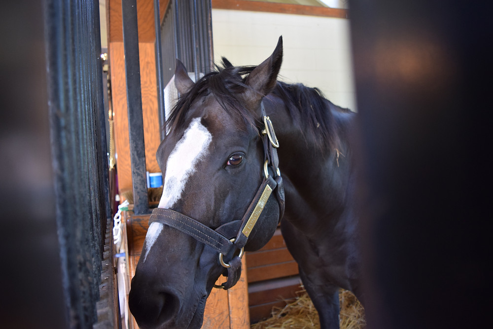 Thoroughbred racehorse and stallion Honor Code at Lane's End Farm.