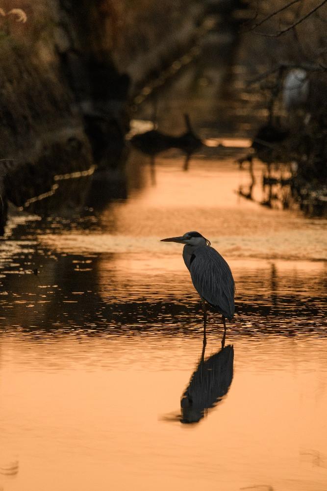 干潟の海と日没 / Tidal flats and sunset