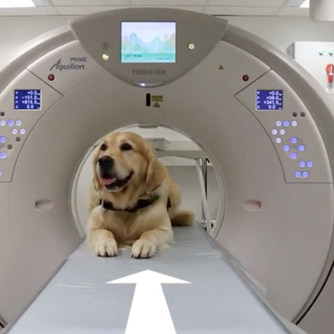 Meet the Dogs Showing Sick Kids How to Go Through Medical Procedures