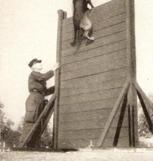 Les chiens dans la Gendarmerie