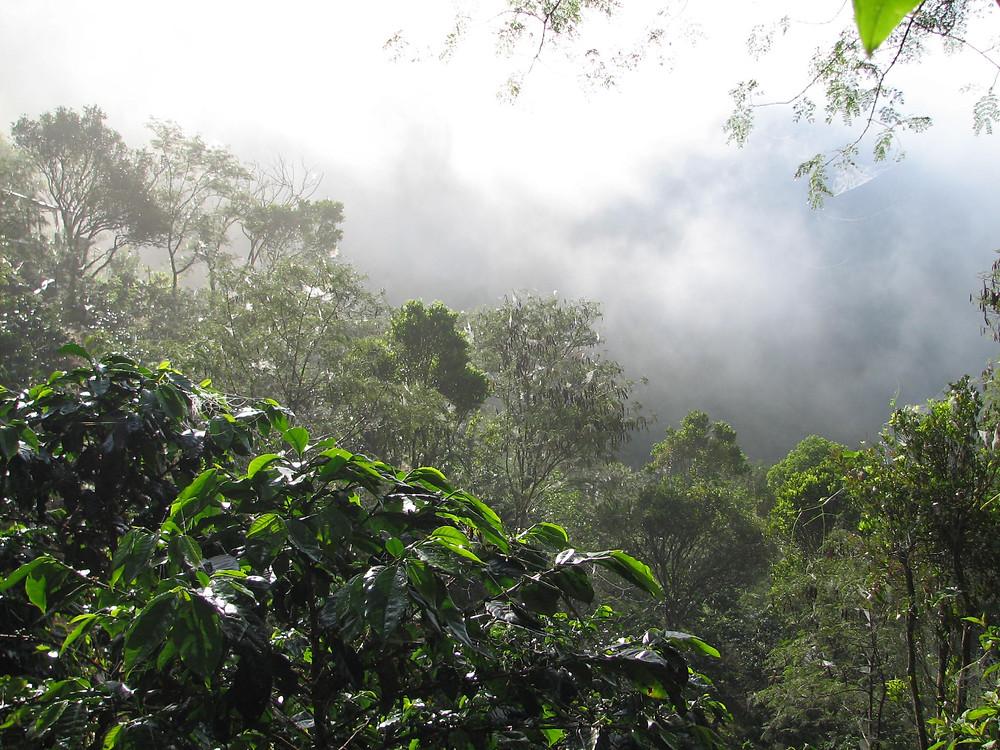 Perkebunan Kopi Gayo Diatas Gunung, sumber: travel.detik.com