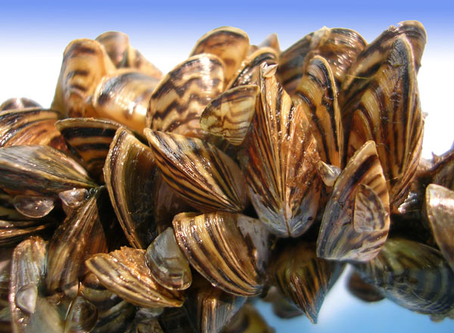 What Even Is An Invasive Species, Anyway?