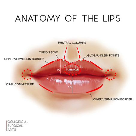 Lip Augmentation and Enhancement: Anatomy of a Perfect Pout
