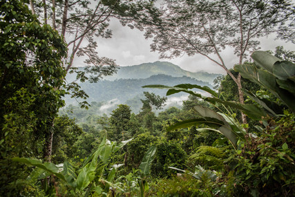 View from 'La Punta' at Finca Bellavista