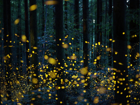 Fireflies as UFOs, or, Fear of Flying Pt. 2