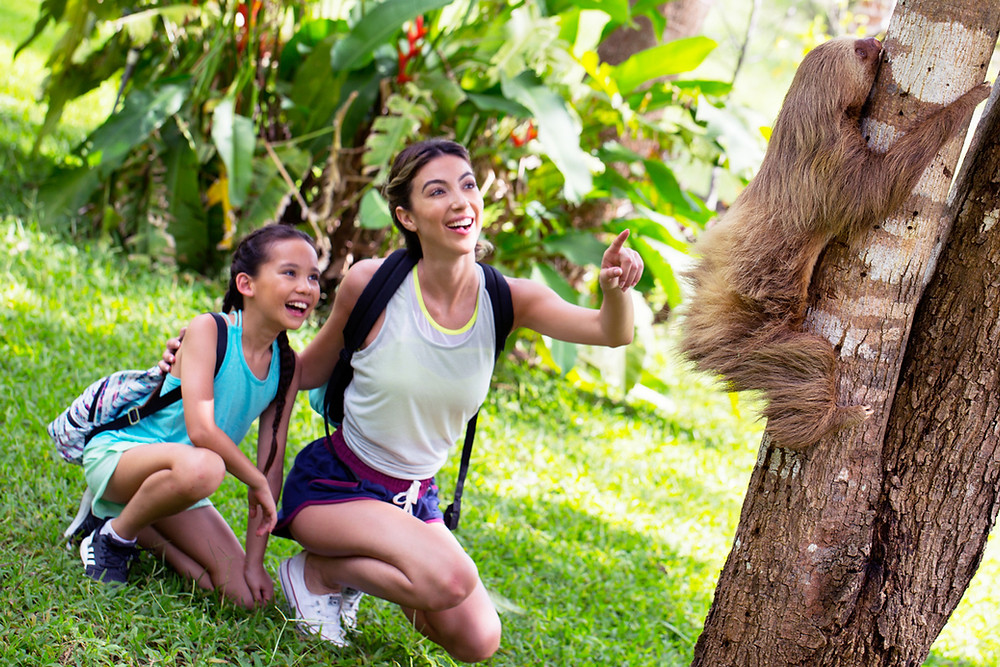 Sloths are commonly found in Costa Rica, as well as other many other exotic wildlife!