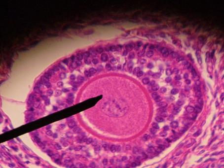 O que é a reserva ovariana?
