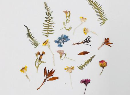 Pressed Flowers & Photographs