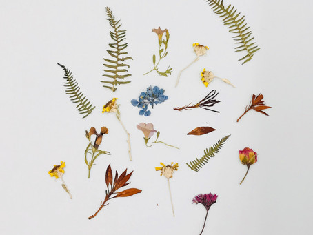 Pressed Flowers & Photographs