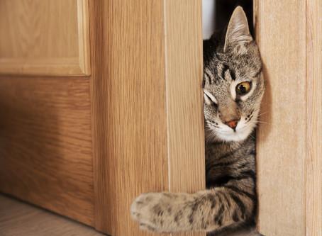 Двери и котята! Будьте внимательны!