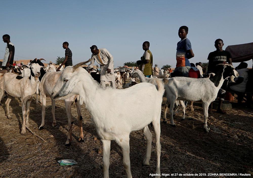 A veces las cabras pueden ser un indicador de que la gente tiene la intención de marcharse. Mahamane Alkassoum, de 37 años, un extraficante de migrantes contempla las cabras a la venta en el mercado de ganado en Agadez, Níger, el 27 de octubre de 2019.ZOHRA BENSEMRA / Reuters