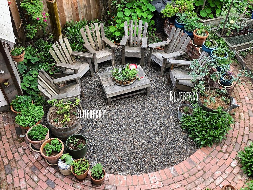 Backyard Garden with Blueberry bushes in half wine barrels.